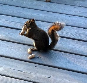 Squirrel On Deck With Images