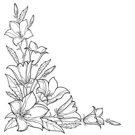 Corner Bouquet With Outline Flower Leaf And Bud In Black Isolated On White Background Flower Drawing Design Flower Sketches Flower Pattern Drawing