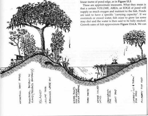 The Gardener And The Tree Album