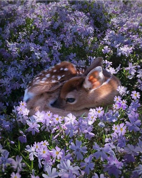 Bambi baby deer in the flowerbed Cute Creatures, Beautiful Creatures, Animals Beautiful, Pretty Animals, Beautiful Flowers, Purple Animals, Beautiful Pictures, Beautiful Things, Beautiful People