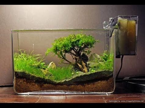Bonsai Moosbaum Terrarium selber machen - YouTube В бутылках - deko fur aquarium selber machen