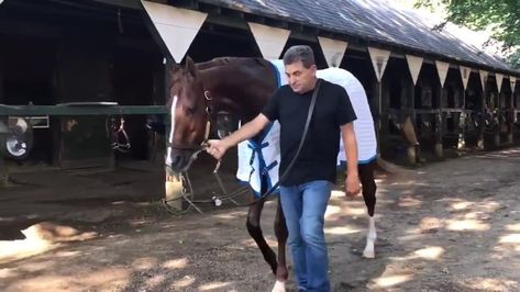 """・Bob Baffert Trainees Fanpage・ on Instagram: """"Welcome to Saratoga, Mucho Gusto! The mid-summer Derby is almost upon us. Mucho Gusto will break from post 7️⃣ in the Runhappy Travers! 👏🏻…"""""""