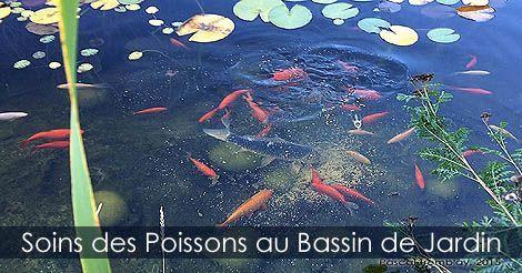 Poissons Pour Bassin Soins Des Poissons Rouge Et Carpes Koi Au