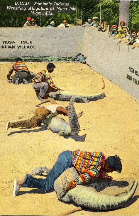Seminole Indians Wrestling Alligators At Musa Isle, Miami, Fla-57835
