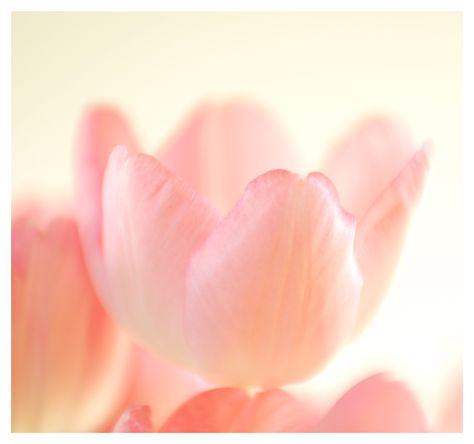 b0ccc0535a7ce30185d9d95d3a6cefc7--pastel-flowers-pastel-pink.jpg