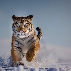 The World S Best Animals Photos Big Cat Family Animals Bengal Cat