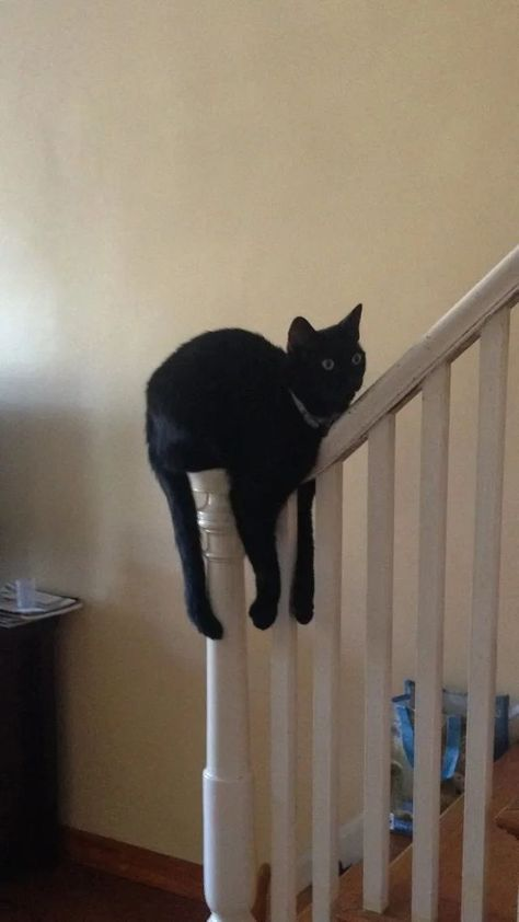 Photo of 14 Cat Posts That You Can Admire Even If You Don't Have A Cat Of Your Own