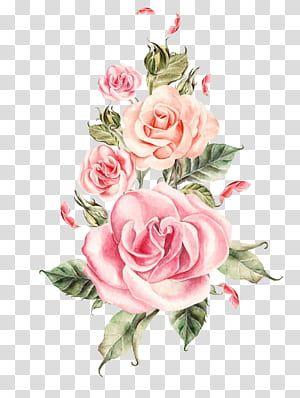 Wedding Rose Flower Hand Painted Pink Roses Bouquet Pink Roses Illustration Transparent Background Pn Rose Flower Png Rose Illustration Pink Roses Background