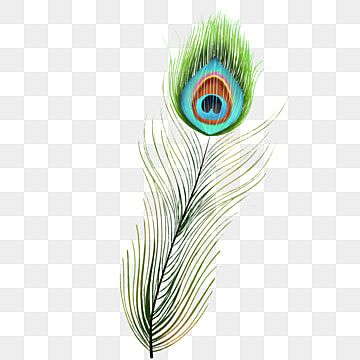 Green Peacock Feather Birds Peacock Feather Green Feather Png Transparent Clipart Image And Psd File For Free Download Feather Background Feather Graphic Janmashtami Wishes