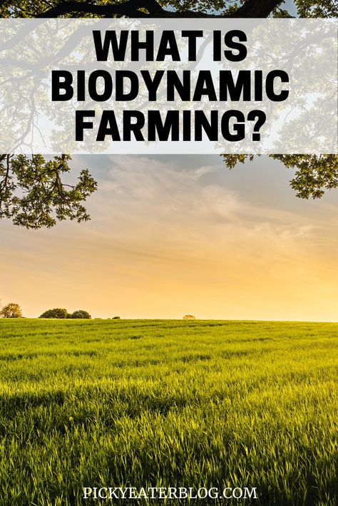 What is Biodynamic farming? - The Picky Eater