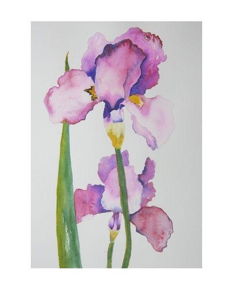 Aquarelle Iris Aquarelle Peinture Et Peinture Aquarelle