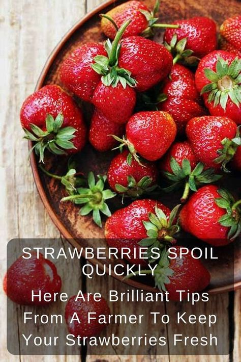 Strawberries Spoil Quickly. Here Are Brilliant Tips From A Farmer To Keep Your Strawberries Fresh