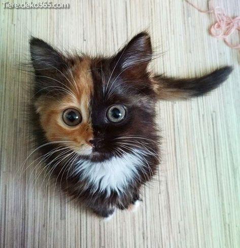 Katze Baby Body lustige Tiermotive Kätzchen