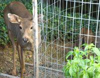 Keep Your Garden Protected Deer Proof Garden Fence Deer Garden