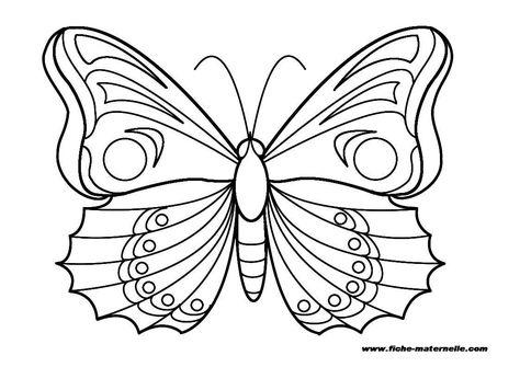 Colorier Les Ailes En Respectant La Symetrie Des Couleurs