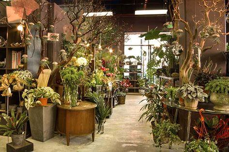 Serenity in San Francisco: Utsuwa Floral Design - indoor garden store #been here #crazy amazing houseplants and terrariums