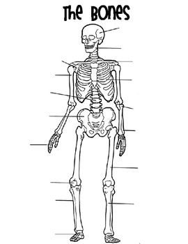 Bones Matching Skeletal System Activity Anatomy Coloring Book Skull Coloring Pages Coloring Books