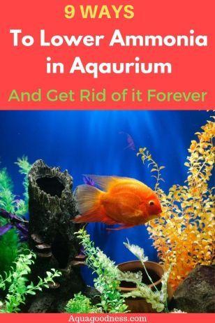 b12d43ec15c28002d847ea4cb53d7edb - How To Get Ammonia Out Of My Fish Tank