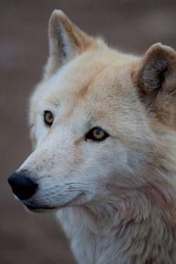Wolf Face Tumblr