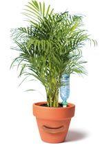 Choisir Son Systeme D Arrosage De Vacances Pour Ses Plantes D