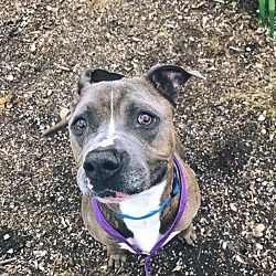 Pin On Animals In Need Of Home