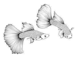 Image Of Aquarium Fish In Black And White Graphics Tattoo Of Graceful Guppies With Beautiful Fins Affilia In 2020 Betta Fish Tattoo Aquarium Fish Abstract Artwork