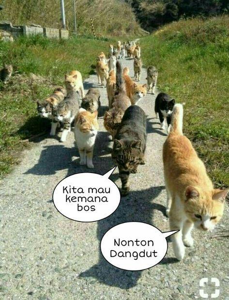 Super Memes Indonesia Kucing Ideas Memes Funny Faces Funny Animal Memes Funny Animals