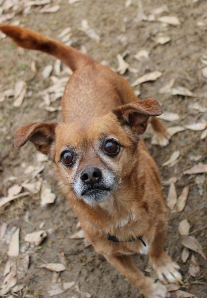 Daug Dog For Adoption In Wetumpka Al Adn 772334 On Puppyfinder