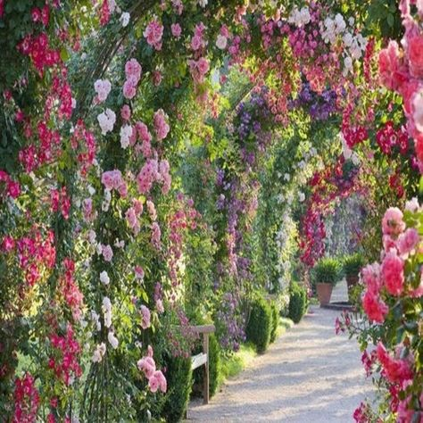 spectacular rose gardens designs arch of roses garden path ideas The Secret Garden, Secret Gardens, Hidden Garden, Garden Paths, Garden Landscaping, Rose Garden Design, Small Rose Garden Ideas, English Garden Design, Cactus Y Suculentas