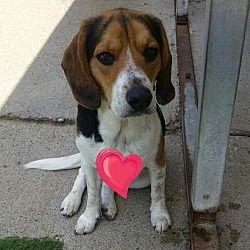 Pet Card Cute Dog Photos Beagle Dog Dog Photos