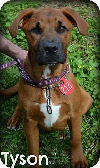 Beaumont Tx Boxer Mix Meet Tyson A Dog For Adoption Http