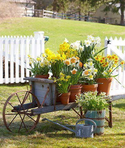 Giardinaggio E Fiori.Hello Spring Great Daffodil Arrangments Carriola Giardinaggio
