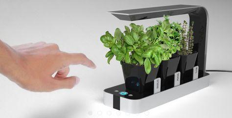 Lampade Per Piante Da Appartamento.Bb Little Garden Un Mini Giardino Da Appartamento Il Kit