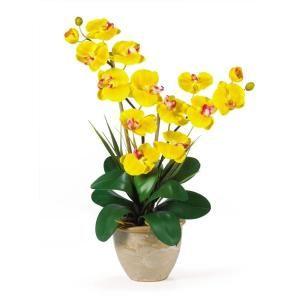 25 In Double Stem Phalaenopsis Silk Orchid Flower Arrangement In 2020 Orchid Flower Arrangements Orchid Arrangements Silk Orchids Arrangements