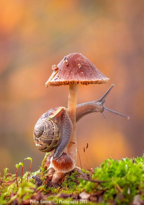 Snail by Rui Pedro Guerra on Amazing Animals, Animals Beautiful, Cute Animals, Beautiful Bugs, Amazing Nature, Macro Photography, Animal Photography, Travel Photography, Wild Mushrooms