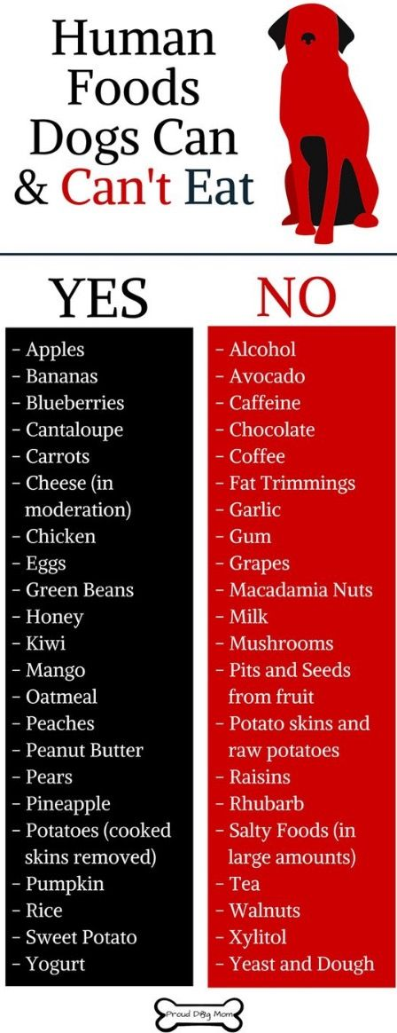List Of Food That Dogs Can Eat