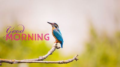 100 Good Morning Bird S Images And Quotes For Free Download Birds Voice Good Morning Good Morning Images