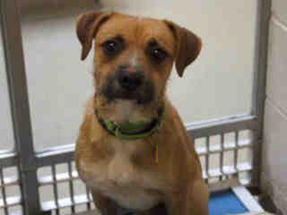 St Louis Pet Adoption Humane Society Pet Adoption Pets