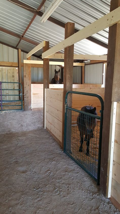 My Dad built the end stall for our bigger horse with a rolling door for her leading to the outside paddock. This stall takes up the width of this barn across the back. All other stalls have removable divider 2 x 10 wooden slats for easy reconfiguration when needed. Barn Stalls, Horse Stalls, Small Horse Barns, Mini Horse Barn, Miniature Horse Barn, Barn Layout, Horse Barn Designs, Horse Paddock, Backyard Barn