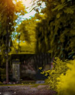 Green Yellow Nature Blur Background Free Stock Download 78 In 2020