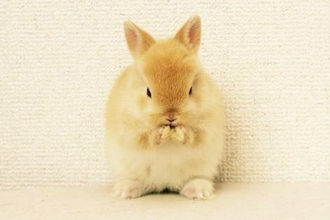 Pin By 板垣 美紗 On ネザーランドドワーフ Animals Cute Animals Pets