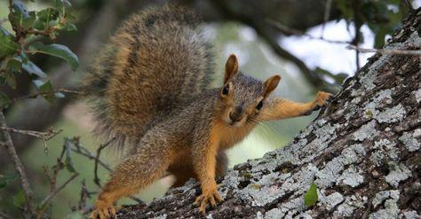 Eichhörnchen füttern - wann und womit? - Tiere - Hilfreich.de