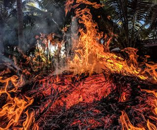 The Amazon Forest Fire Causes Deforestation And Drought A New