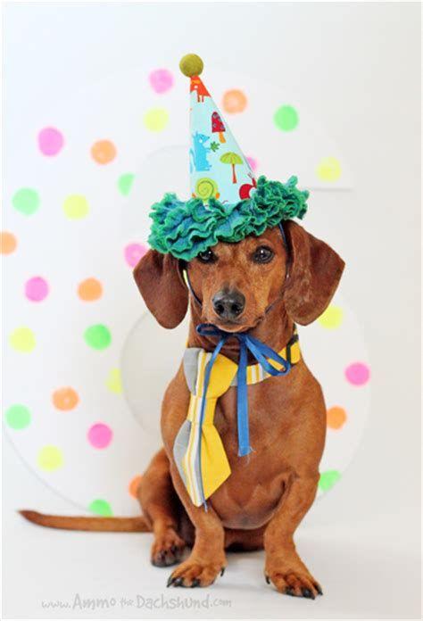 Images Happy Birthday Dachshund Dachshund Birthday Happy