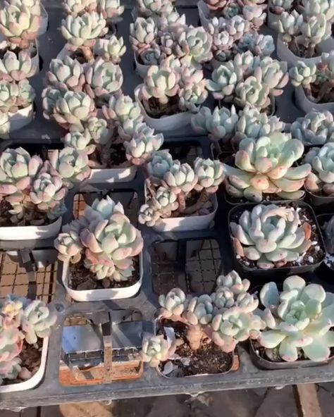 Want to learn how to successfully repot your succulents? Click to learn