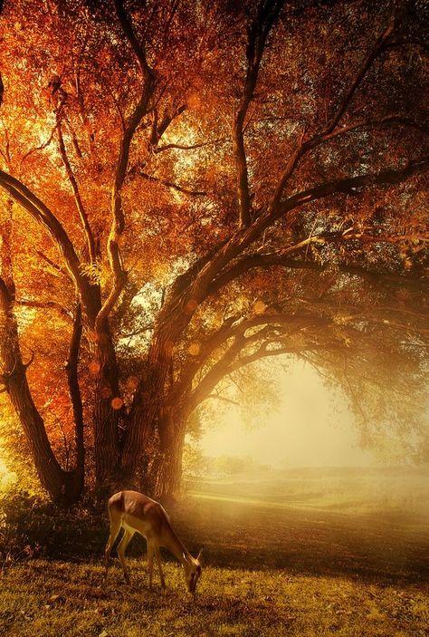 Deer on Autumn morning - beautiful -- Ah the beauty of fall!