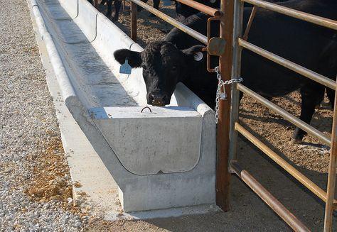 Found On Bing From Precast Org In 2020 Raising Farm Animals Feed Trough Cattle Farming