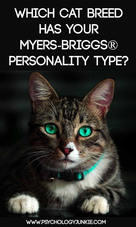 Which Cat Breed Fits Your Myers Briggs Personality Type Cat Breeds Personality Types Myers Briggs Personality Types