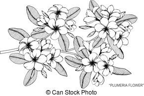 Plumeria Flower Drawing And Sketch With Black And White Line Art Flower Drawing Wreath Drawing Plumeria