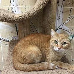Pet Card Animal Welfare League Cat Adoption Pets